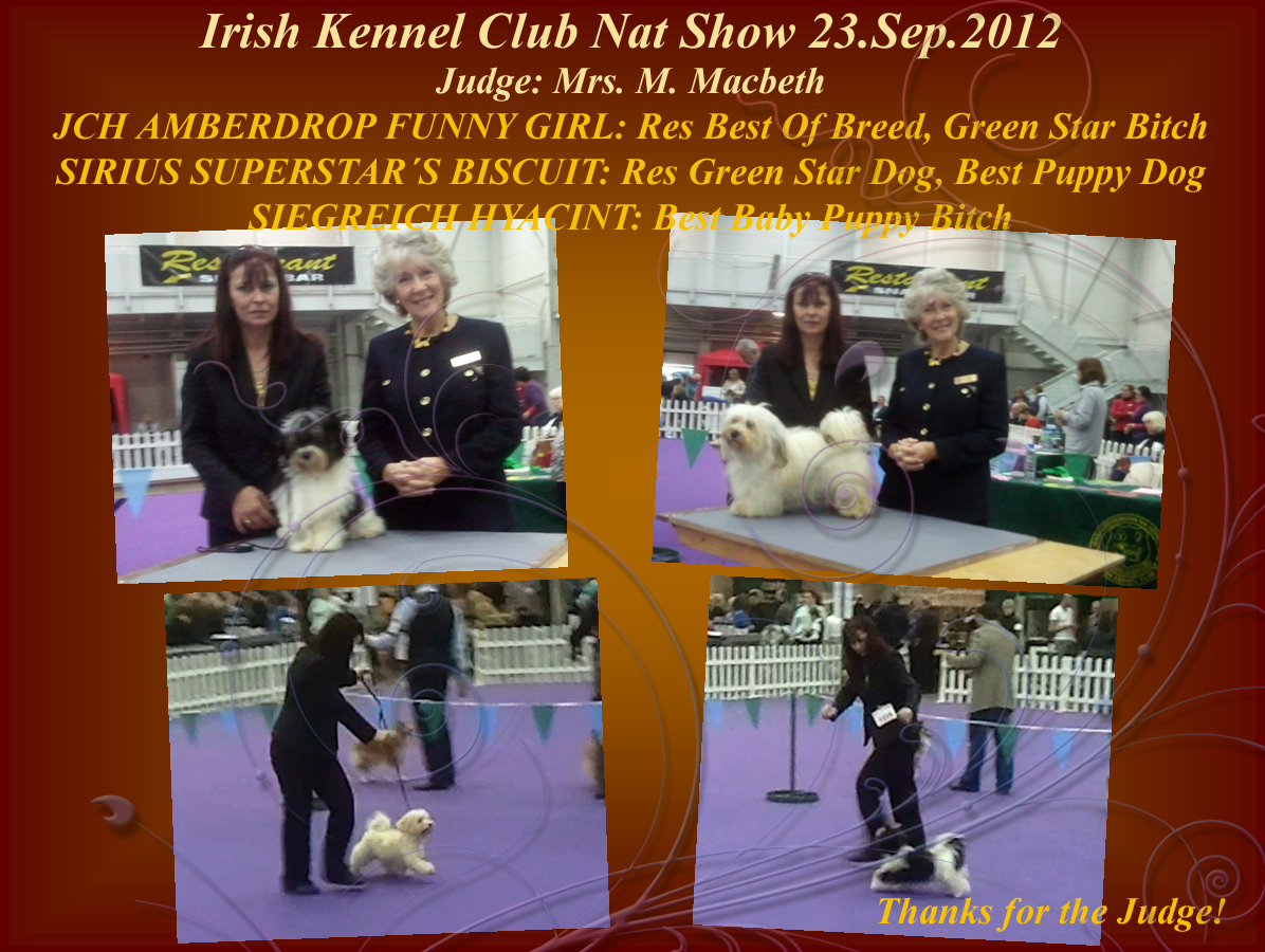 Funny-Biscuit-Hyacint at Nat Show 2012