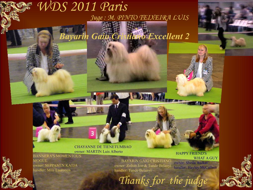 WDS 2011 Paris - Jasper - Excellent 2