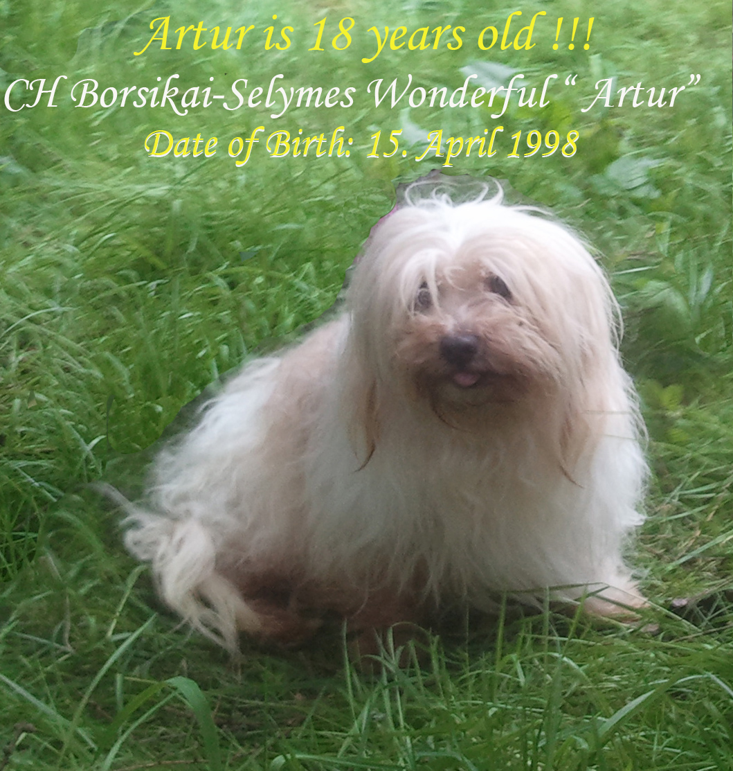 18 years old Ch Havanese male Artur