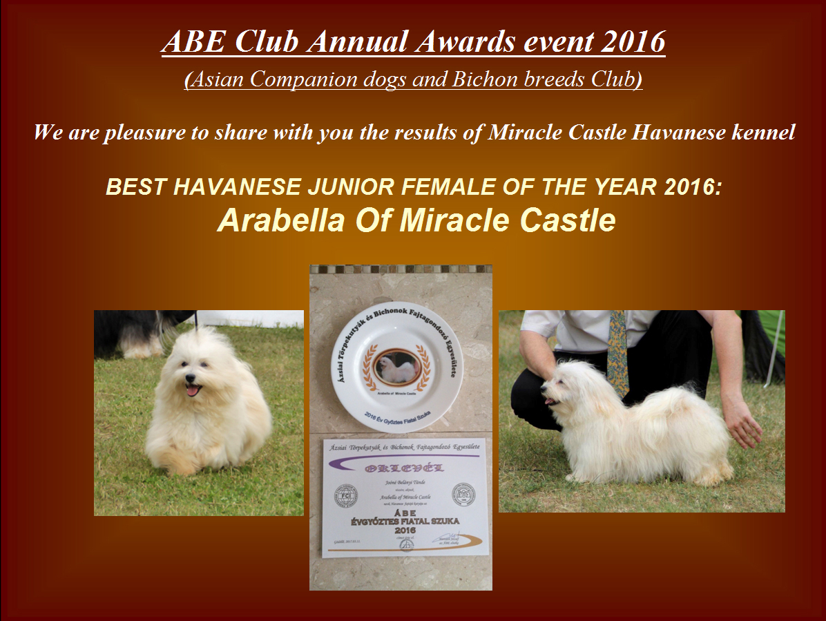 Best Havanese junior female of the year 2016 Arabella Of Miracle Castle
