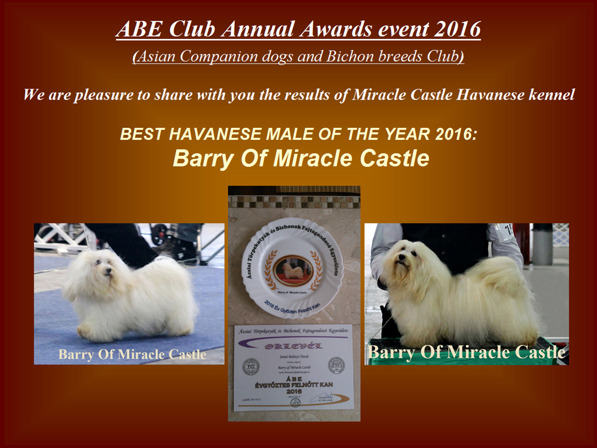 Best Havanese male of the year 2016 Barry Of Miracle Castle