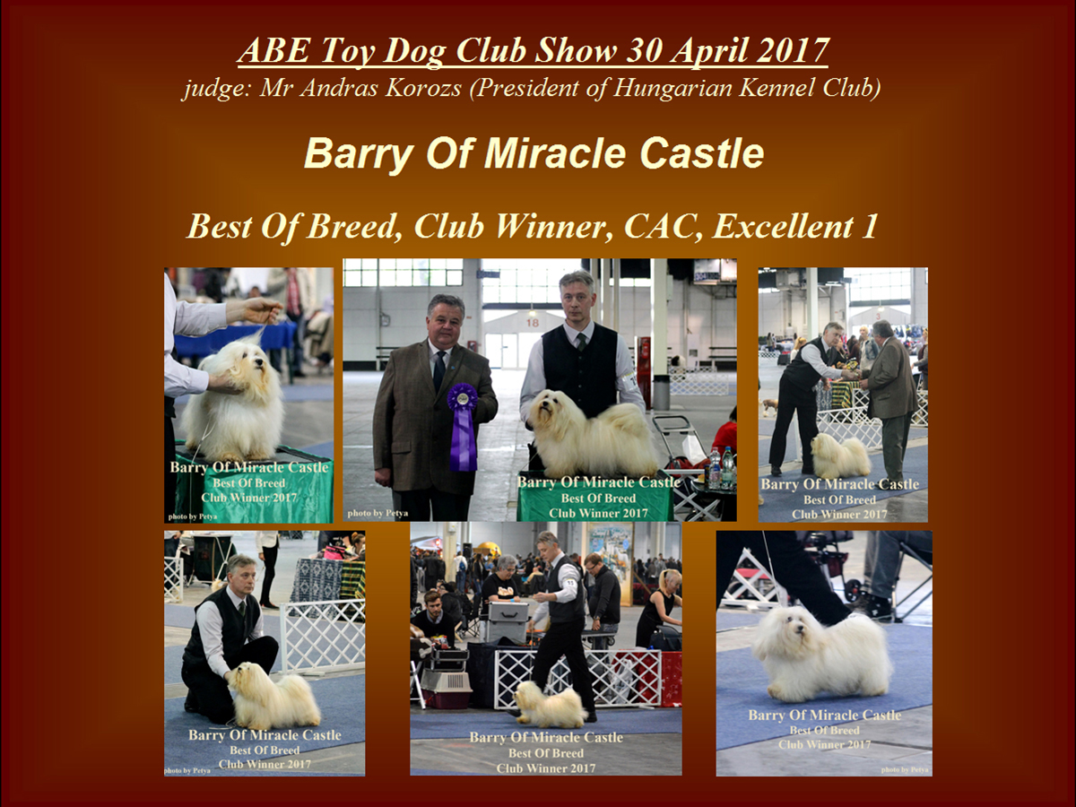 Club Winner Havanese male 2017 Barry Of Miracle Castle