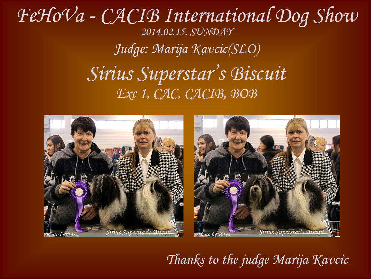 Sirius Superstar's Biscuit - CACIB, Best of Breed