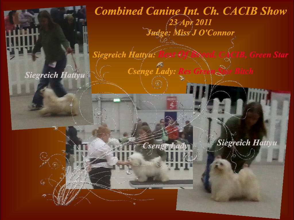 CACIB show - Siegreich Hattyu Best Of Breed