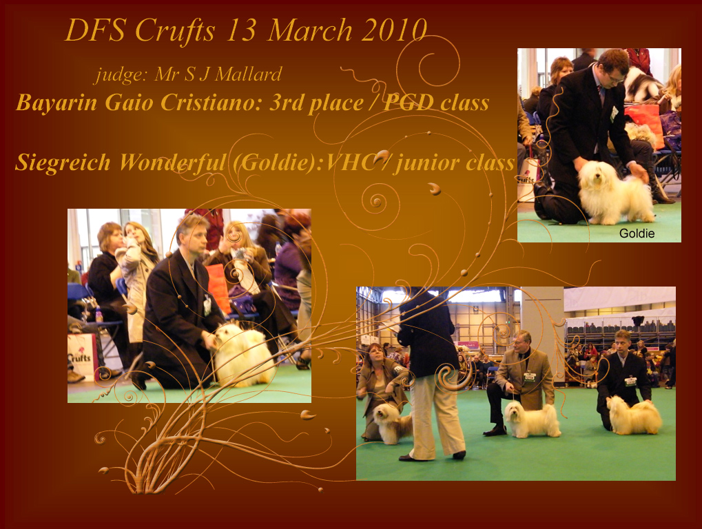 Crufts 2010 Havanese males from Siegreich kennel