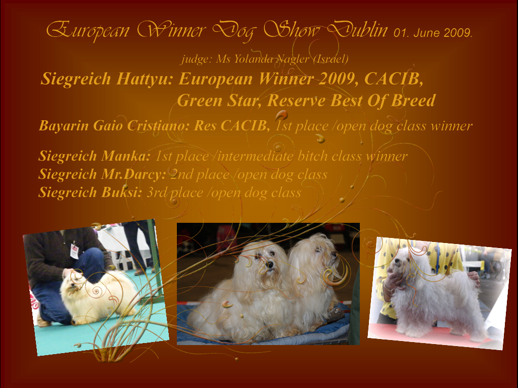 European Winner 2009 Havanese female Siegreich Hattyu