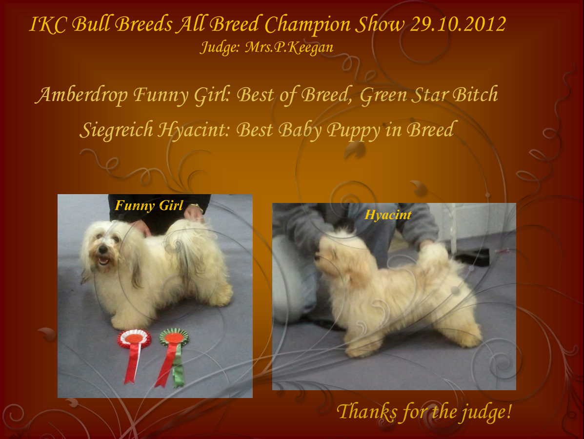 Amberdrop Funny Girl - Best of Breed, Green Star, Siegreich Hyacint - Best Baby Puppy in Breed