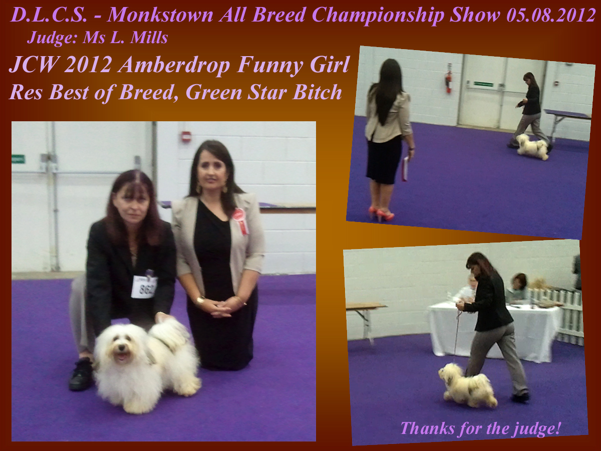Havanese female - Amberdrop Funny Girl - Res Best of Breed, Green Star |Bitch