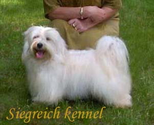 Bichon Havanese male Junior World Winner 2006