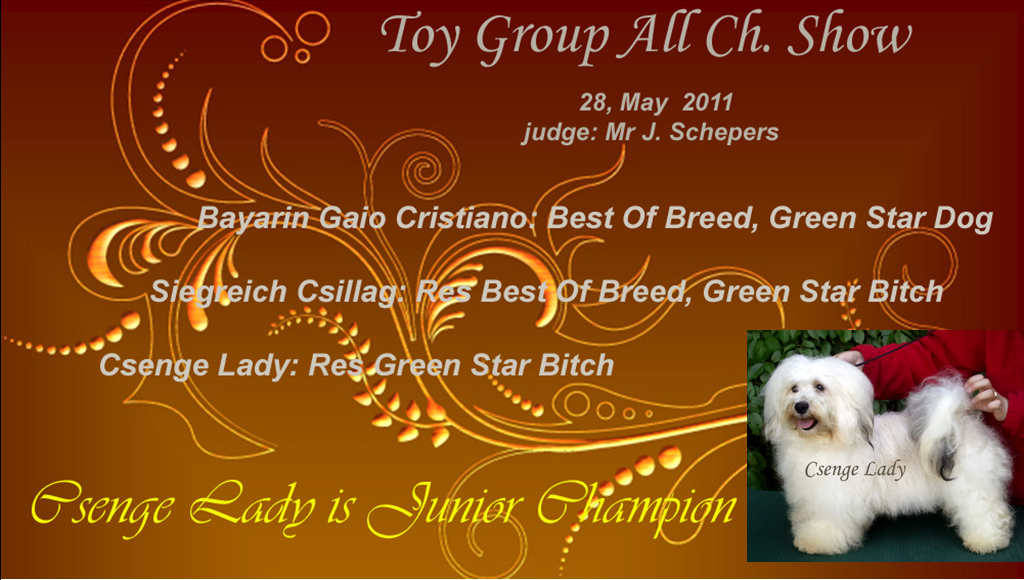 Junior Champion Havanese female - Csenge Lady