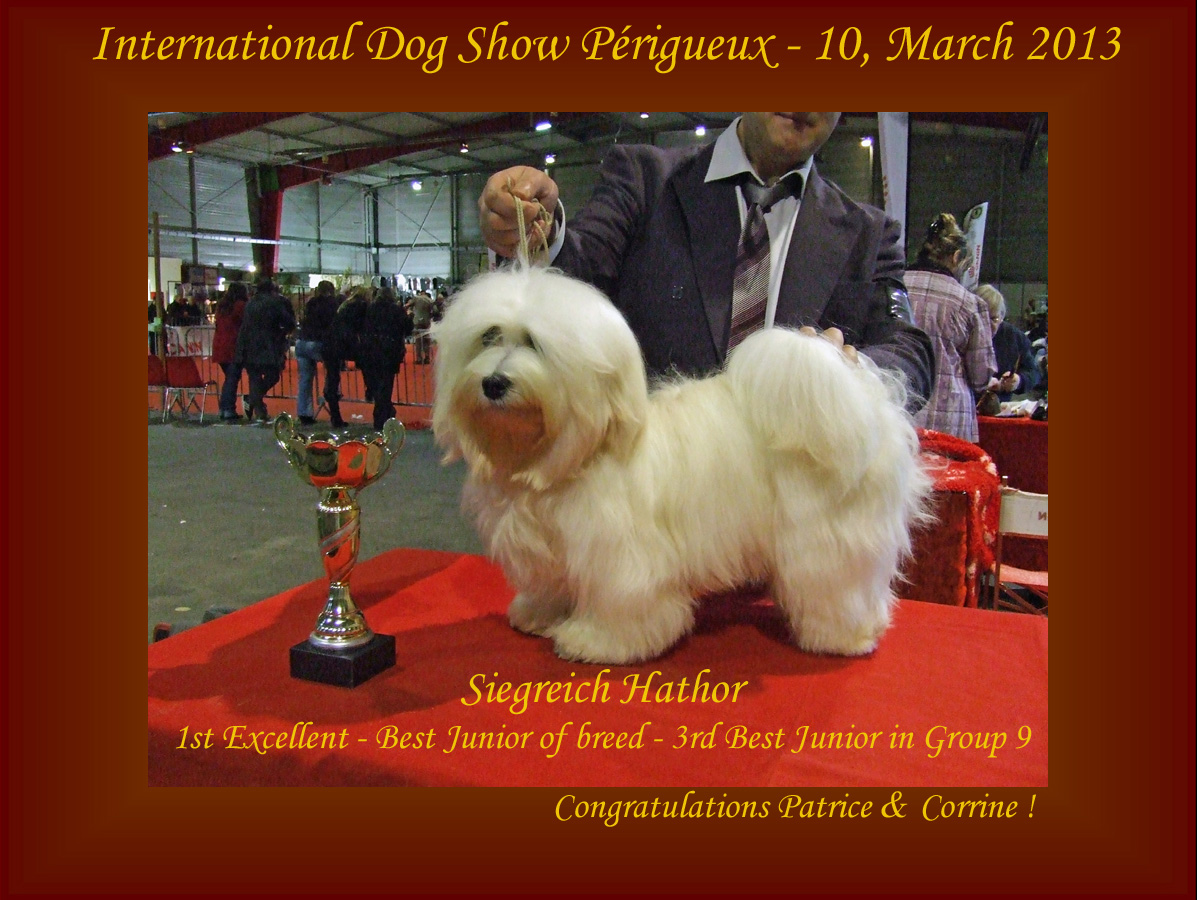 Siegreich Hathor Havanese female - 3rd in Group 9