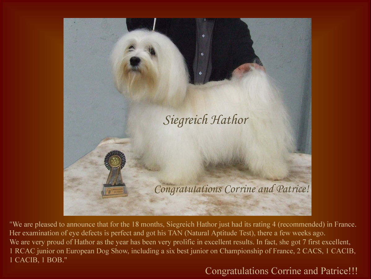 Siegreich Hathor -  Havanese female
