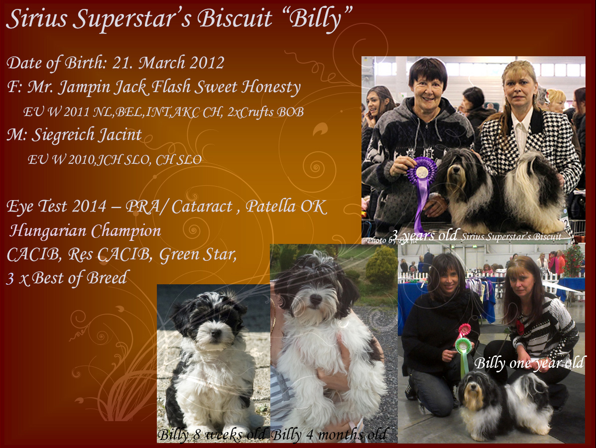 "Sirius Superstar's Biscuit ""Billy"" Havanese male"